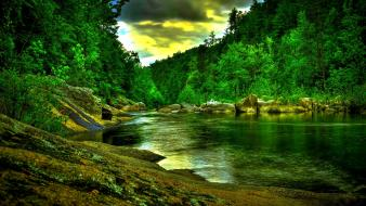 Forest river wallpaper