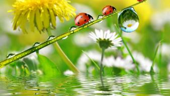 Ladybirds jootix wallpaper