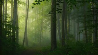 Landscapes nature trees fog morning pathway mystical wallpaper