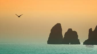 Mountains birds seaside peaceful sea Wallpaper