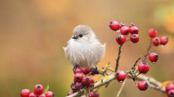 Nature birds animals berries wallpaper