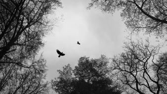Trees birds grayscale branches wallpaper