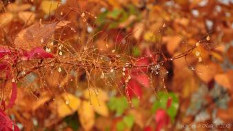 Water autumn flowers drop leaves dew colors wallpaper