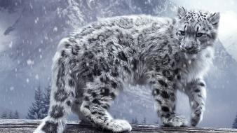 White cats snow leopards irbis wallpaper