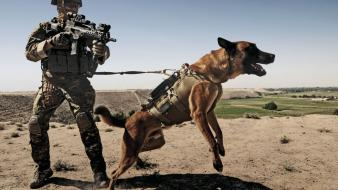 Afghanistan belgian shepherd dog g36c german wallpaper