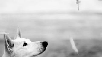 Animals dogs feathers grayscale nature Wallpaper