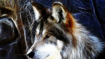 Animals fractalius wolves wallpaper