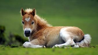 Animals nature ponies wallpaper