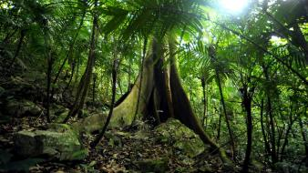 Biosphere reserve mexico green jungle Wallpaper