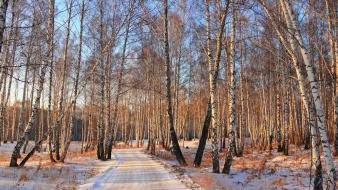 Birch landscapes natural scenery nature snow wallpaper