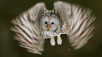 Birds national geographic owls motion blur flight wallpaper