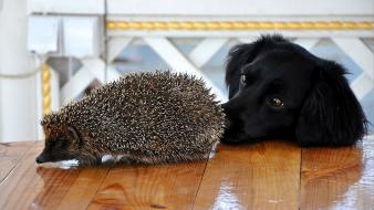 Black animals dogs hedgehogs lovely wallpaper