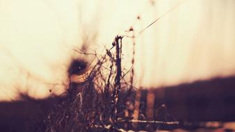 Blurred background bokeh depth of field fences nature wallpaper