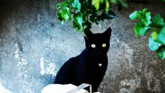 Eyes black cats calabria italia Wallpaper