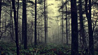 Fog forests mist nature trees Wallpaper