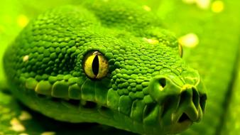Green nature animals snakes wallpaper