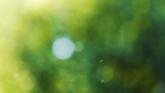 Green nature bokeh july wallpaper