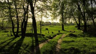 Green nature trees forests villages Wallpaper