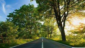Green nature trees roads wallpaper