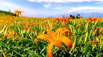 Landscapes nature flowers fields orange wallpaper