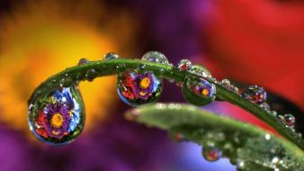 Nature flowers leaves water drops reflections bing Wallpaper