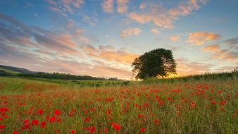 Plymouth fields flowers plains poppies wallpaper