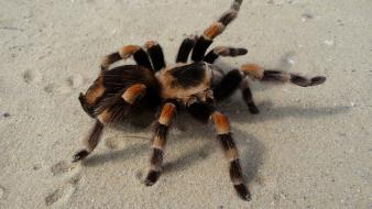 2009 animals arachnids spiders wallpaper