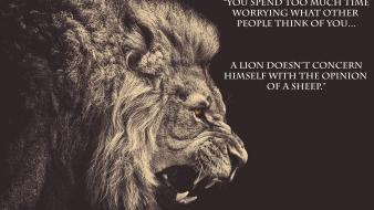 Animals lions quotes upscaled wallpaper