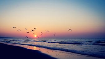 Beaches birds flock nature wallpaper