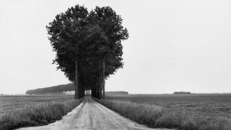 Black and white landscapes trees fields roads monochrome wallpaper