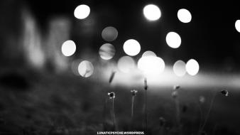 Black and white streets flowers bokeh wallpaper