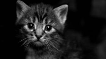 Black dark cats animals kittens greyscale wallpaper