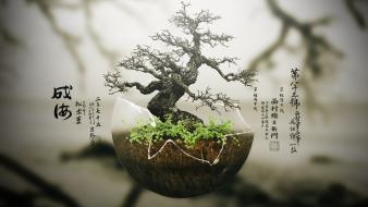 Bonsai chinese characters plants trees wallpaper