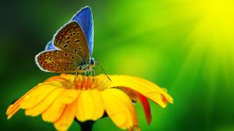 Butterflies flowers macro nature wallpaper