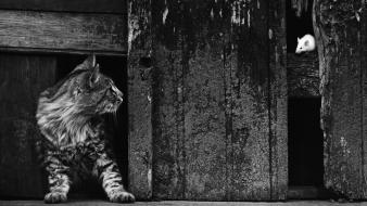 Cats grayscale mice pedro luis raota wallpaper