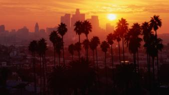 Cityscapes palm trees wallpaper