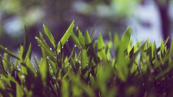Close-up nature grass Wallpaper