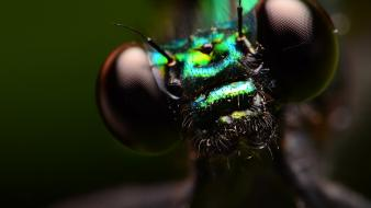 Dragonflies insects iridescence macro wallpaper