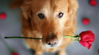 Flowers animals dogs wallpaper