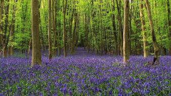 Flowers forests nature purple wildflowers wallpaper