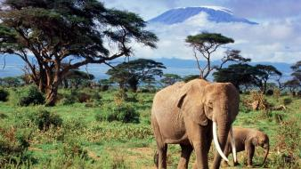 Landscapes animals elephants baby Wallpaper