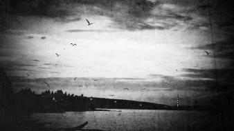 Landscapes birds monochrome sea shorelines waterscapes skies wallpaper
