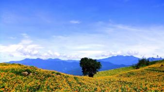 Landscapes nature trees flowers fields hills orange wallpaper