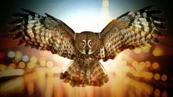 Lights bokeh owls artwork macro wallpaper