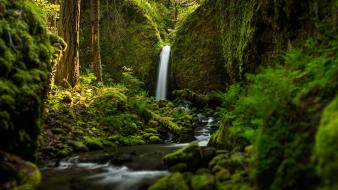 Nature forests oregon waterfalls ruckel creek falls Wallpaper