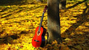 Nature music trees leaves classic guitars wallpaper