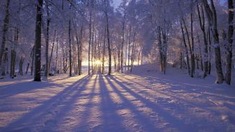 Nature winter snow trees forests Wallpaper