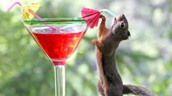 Red animals squirrels cocktail drinks drinking blurred background wallpaper