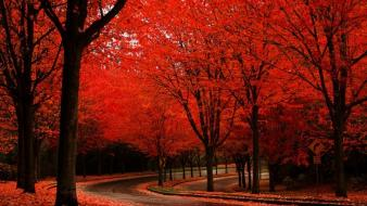 Trees autumn red roads wallpaper