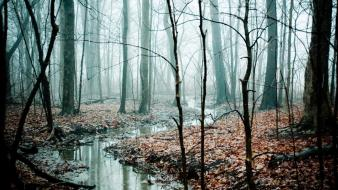 Trees forests mist streams Wallpaper